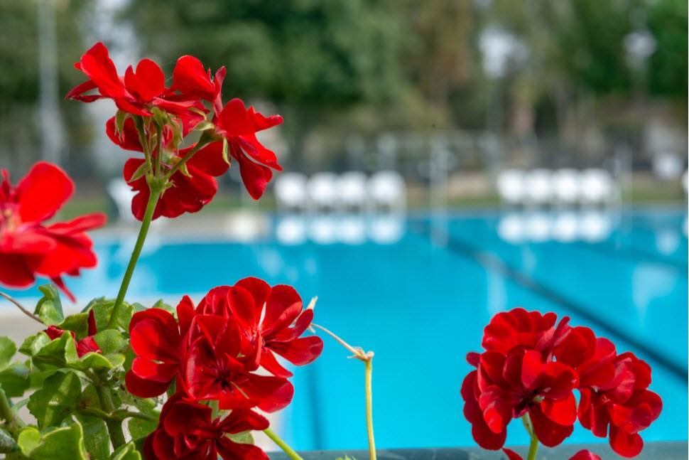 Kibbutz Mizra - Pool Outside