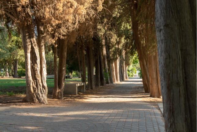 Street -  Kibbutz Mizra